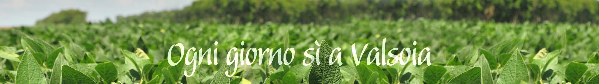 Valsoia, una scelta di campo: No OGM